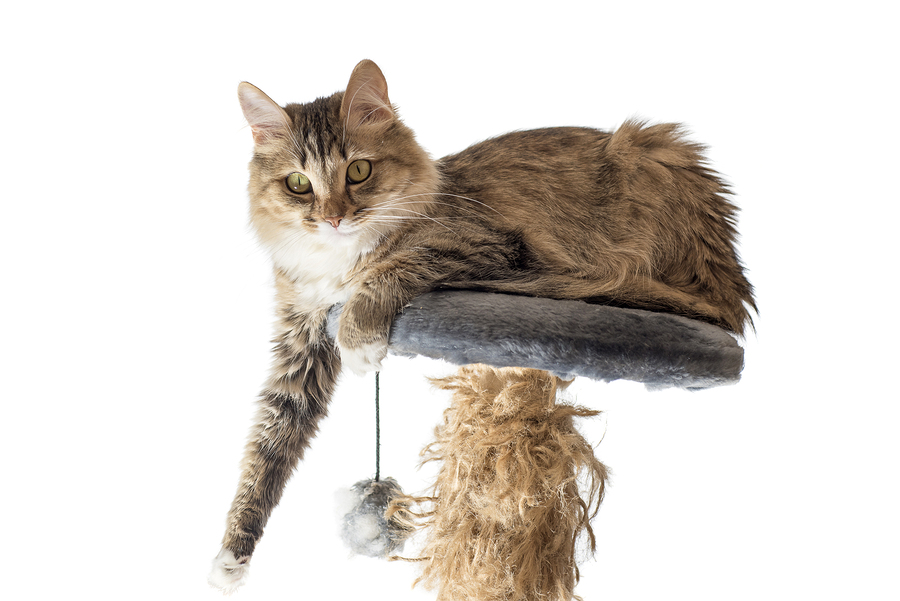Senior Care in Laguna Niguel CA: Adopting a Shelter Cat